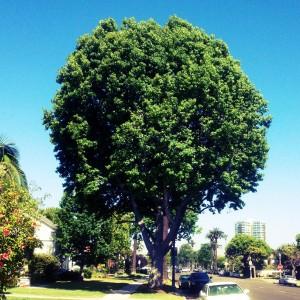 7-9-2012-My-Tree1-square