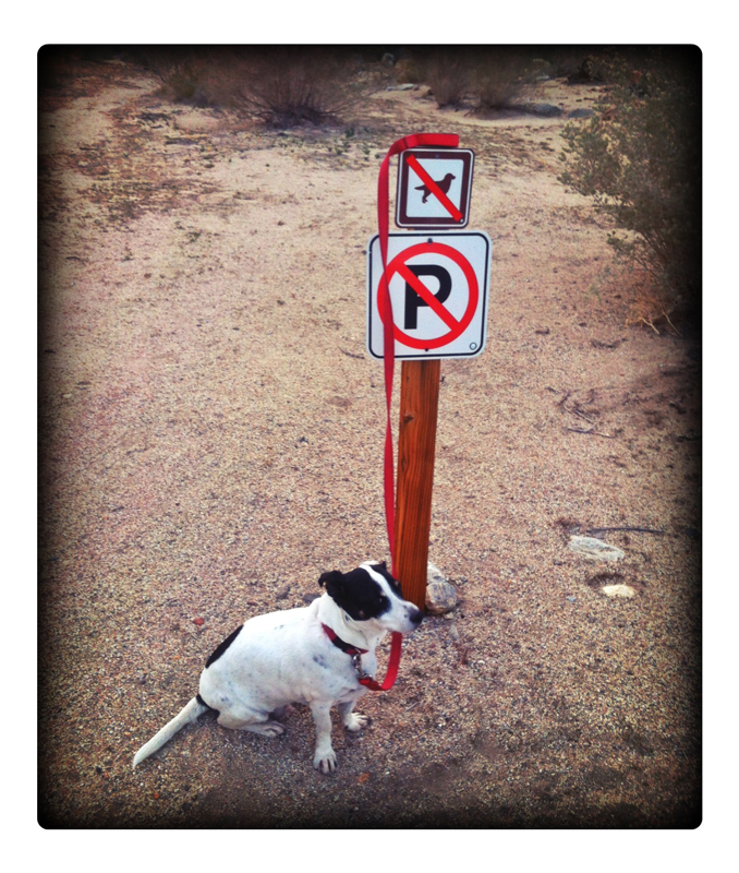 Anza-Boreggo-Defiant-Dog