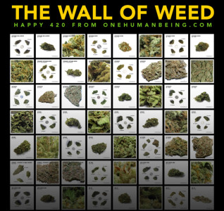 wall-of-weed-promo-square