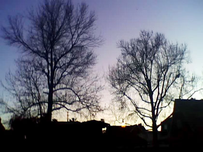 Long Beach at dusk with winter trees...