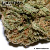 bubbleberry_03_30_2009_full_2.jpg