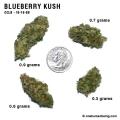 blueberrykush_10_16_08_full_1.jpg