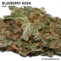 blueberrykush_10_16_08_full_2.jpg