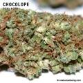 Chocolope_9_3_08_full_2.jpg