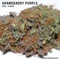 GranddaddyPurple_9_30_08_full_2.jpg