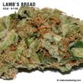 Lambsbread_9_7_08_full_2.jpg