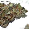 juicyfruit_10_16_08_full_2.jpg