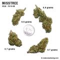 misstree_10_16_08_full_1.jpg