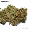 misstree_10_16_08_full_2.jpg